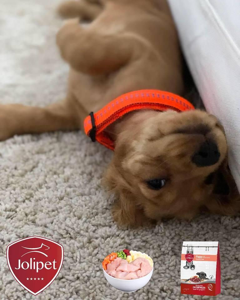 Jolipet for Pups